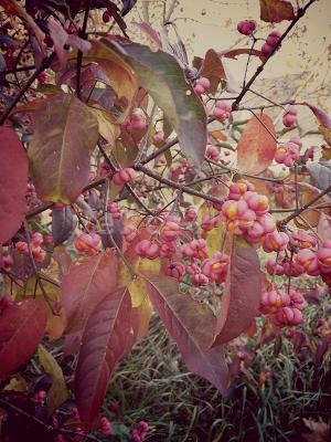 Herbstschätze richtig in Szene setzen