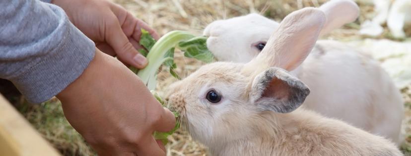 Kaninchen Haltung: Wie bekommen wir unsere Kaninchen handzahm?